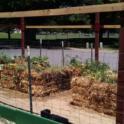 Straw Bale Garden June 2016